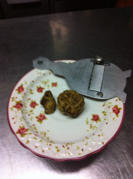 By our Company Organic Agriculture - WHITE TRUFFLE